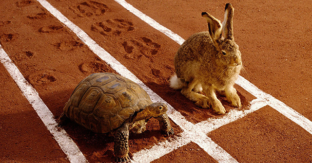 Active8me micro actions are the key to your fitness success turtle and hare finish line